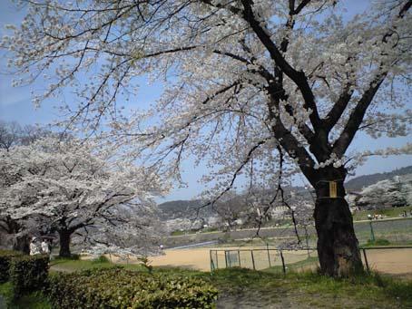 京都 2 鴨々川 B