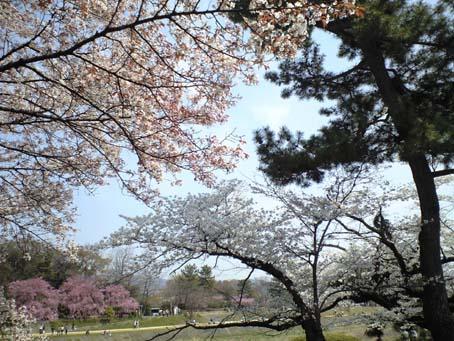京都 4 鴨々川 B