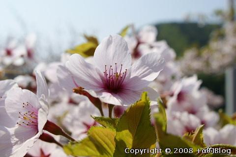 satoyama08b_eip.jpg