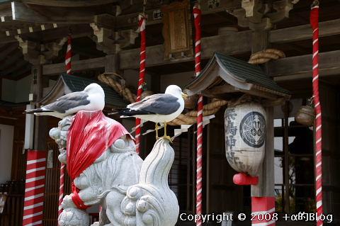 umineko080523d_eip.jpg
