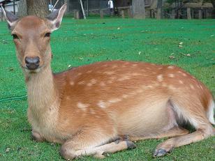 鹿さんお座り