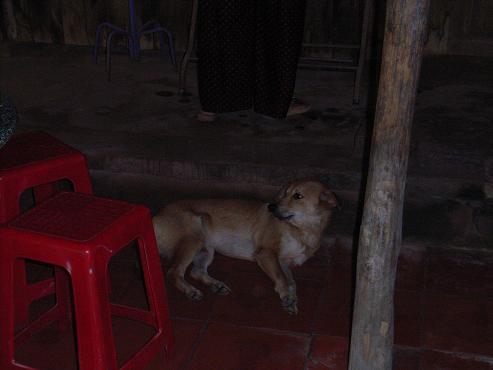 タイソン島の犬