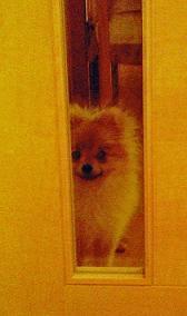 ドア越しのしをんさん