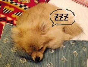 熟睡しをん