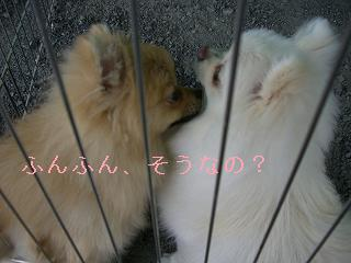 井戸端ポメ会議2