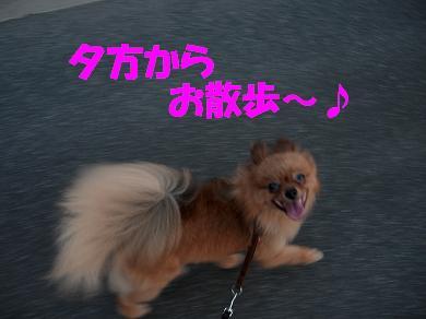 夕方からお散歩~♪
