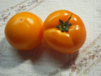 裏はまさにトマト