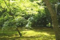 新緑の金閣寺前