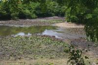 竜安寺工事中の池