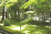 竜安寺緑美しい庭