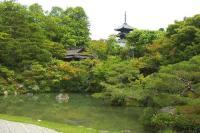 仁和寺北庭からの五重の塔