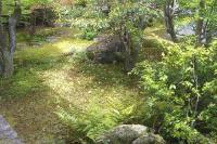 仁和寺のお庭