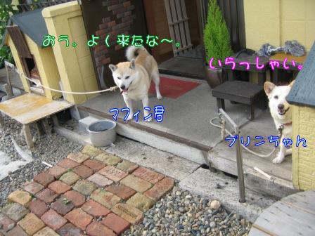 ぷりん&まふぃんちゃん