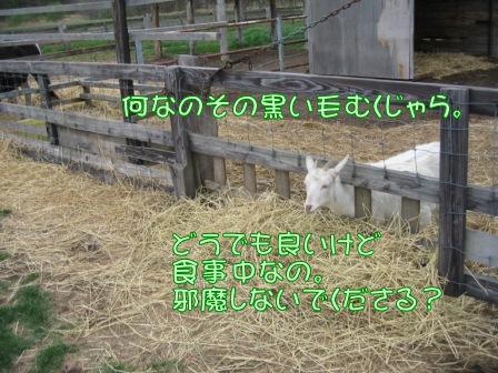 IMG_7718.jpg