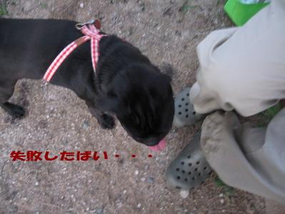 022_20080803225141.jpg