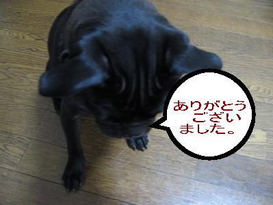 099_20080715211328.jpg