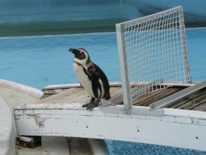 たたずむペンギン2