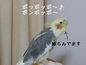 ぽんぽっぽ