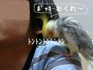 ポッキ-おくれ4