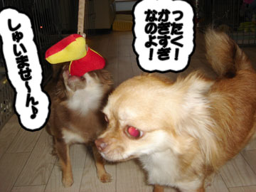 chichi2.jpg