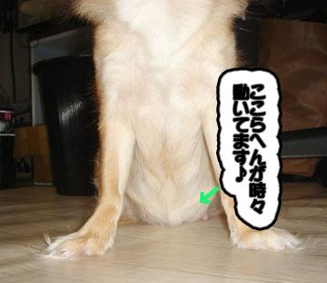 chichi3.jpg