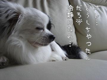 kururi4.jpg