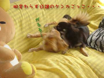 seichou1.jpg