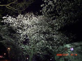 桜326 017