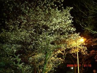 桜326 019