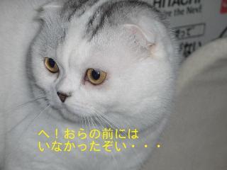 ねこ429 082