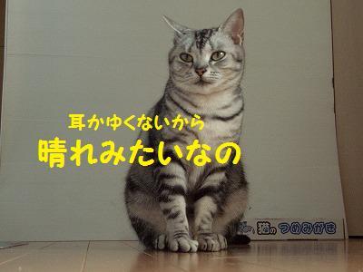ねこ614-2 121