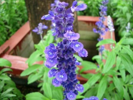 20080628花3
