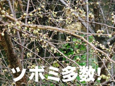 2008032002.jpg
