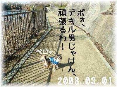 2008041102.jpg
