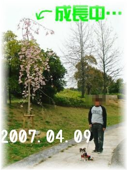 2008041104.jpg