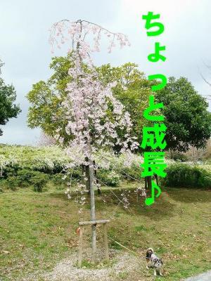 2008041105.jpg