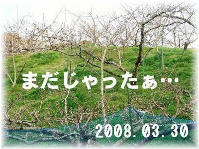 2008041106.jpg
