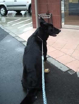 20080324狂犬病注射 (35)2