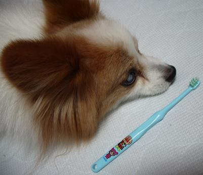歯磨きユウ