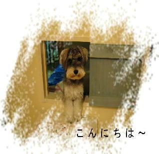 2008_0701アルバム0148
