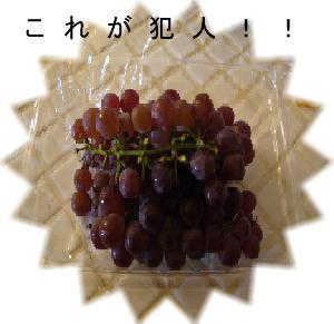 2008_0702アルバム0173