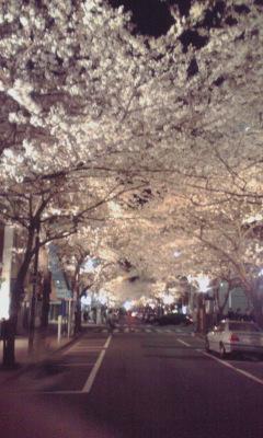 夜桜_080331