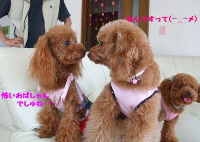 2008_07020049.jpg