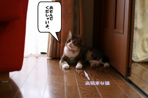 20080329_0581.jpg