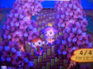 もりもり村で夜桜