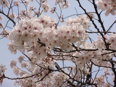 咲くLOVE