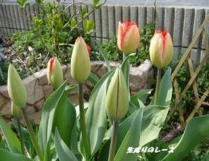 P1120061ブログ