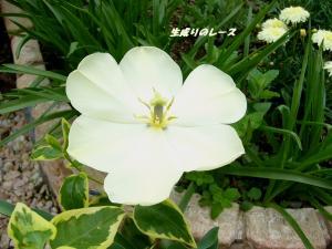 P1120149ブログ