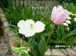 P1120152ブログ