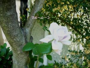 P1120481ブログ